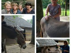 RainDrop Techniek ezels paarden Young Living